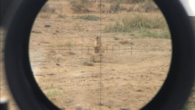 224 Valkyrie with 53g Vmax, any good for Varmints? Scope footage!