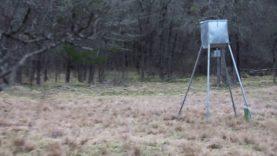 Hog hunt with Ozark Spirit