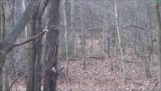 12yrs in the Making Deer Hunt 2019
