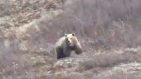 Chuck's Solo Brown Bear Hunt