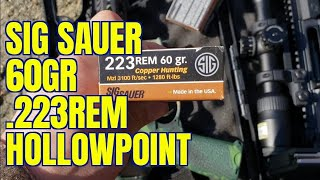 Sig Sauer 60gr 223 HP Review with 16 and 18 AR 15s