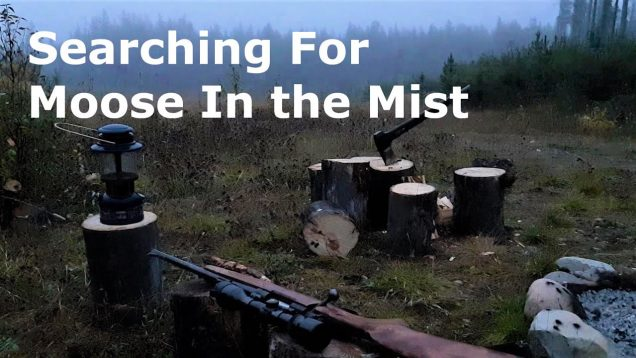 Searching For Moose In The Mist