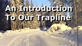 An Introduction To Our Trapline
