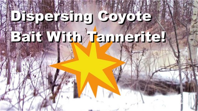 Dispersing Coyote Bait… With Tannerite!