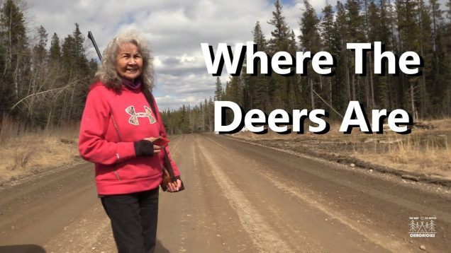 Where The Deers Are